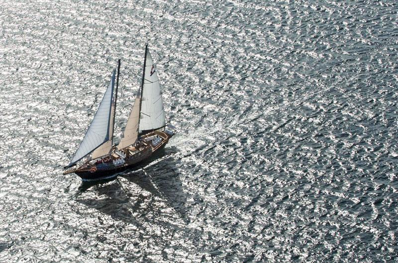 Amoeba Sailing Tours