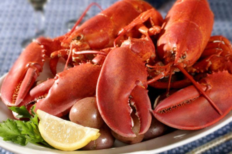 Lobster, Lobster!