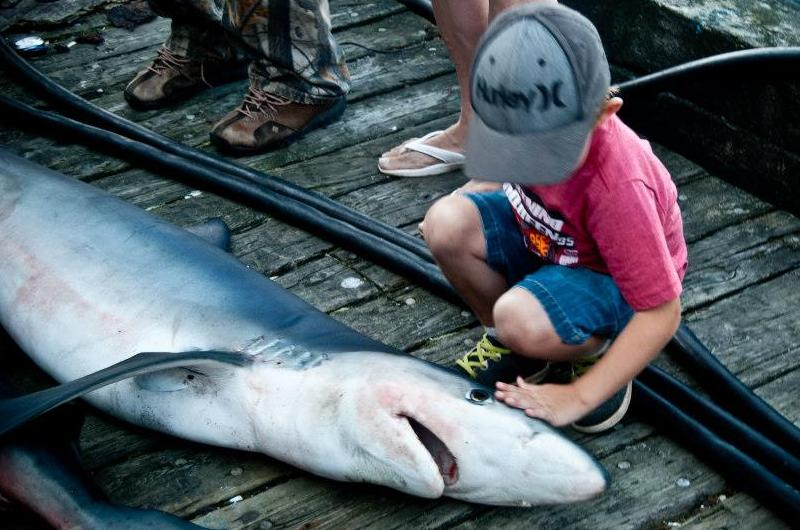 5th Annual Quot Mako My Day Quot Louisbourg Shark Fishing Derby